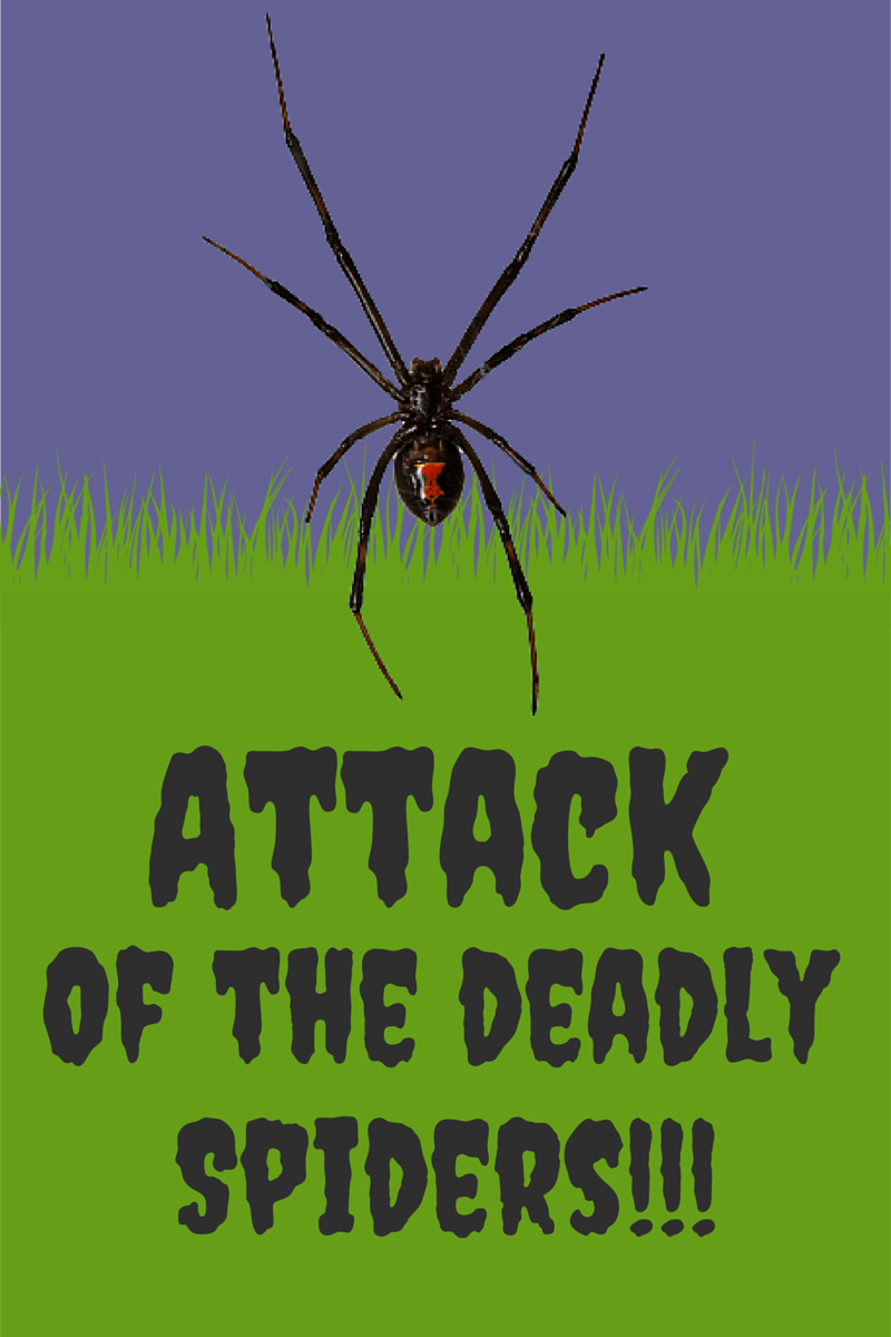 Scary Spiders in Your Home
