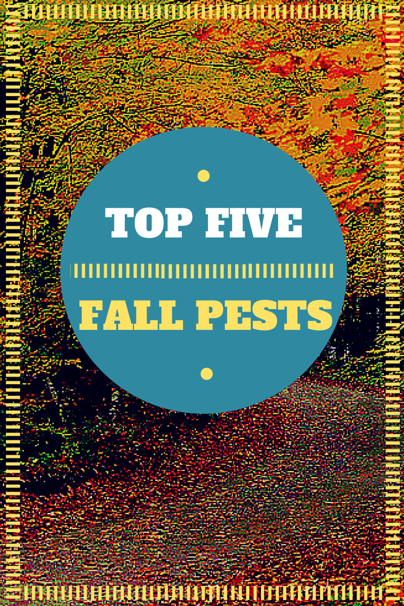 Top 5 Fall Pests