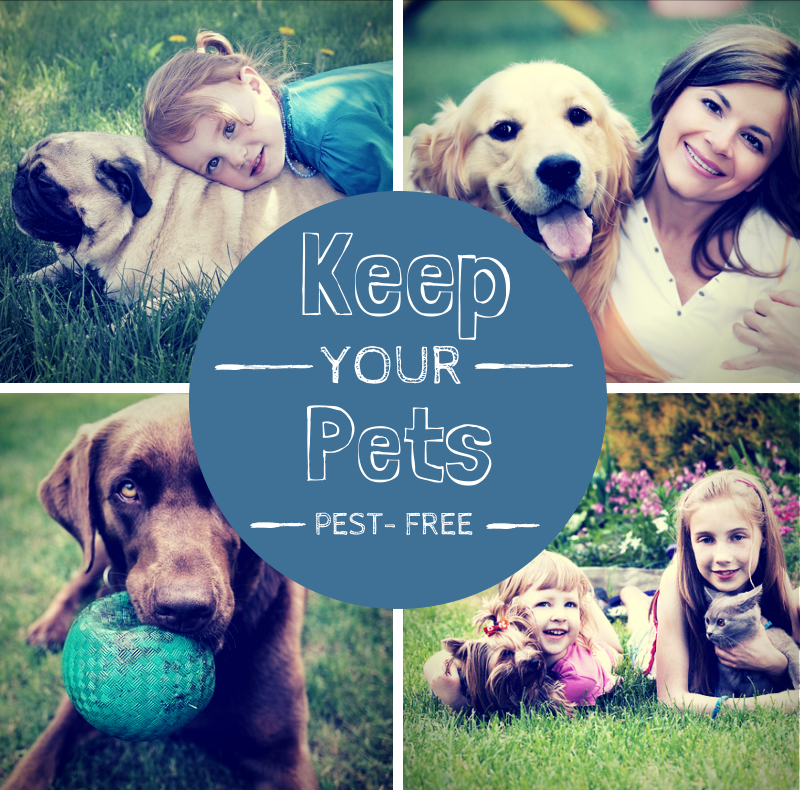 Keeping your Pets Pest-Free in Summer