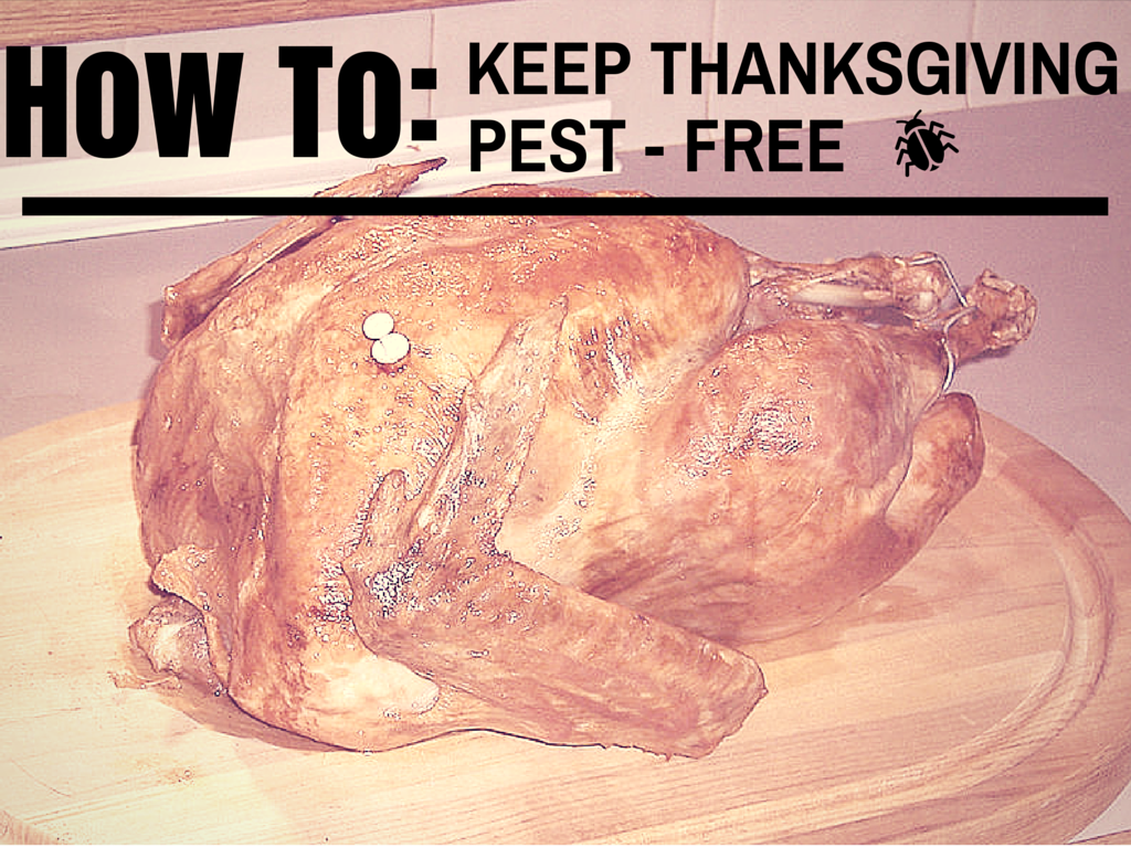 Don't Invite Pests to Thanksgiving Dinner!